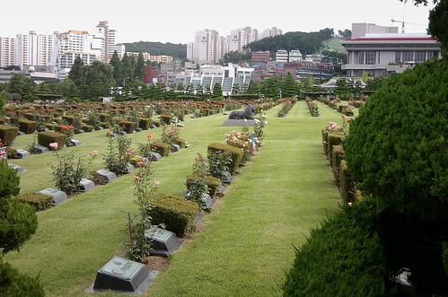 British graves, UN Cemetery, Busan