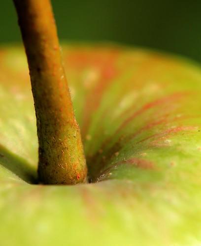 macro apple bokeh applestem canon60mmusmmacrolens