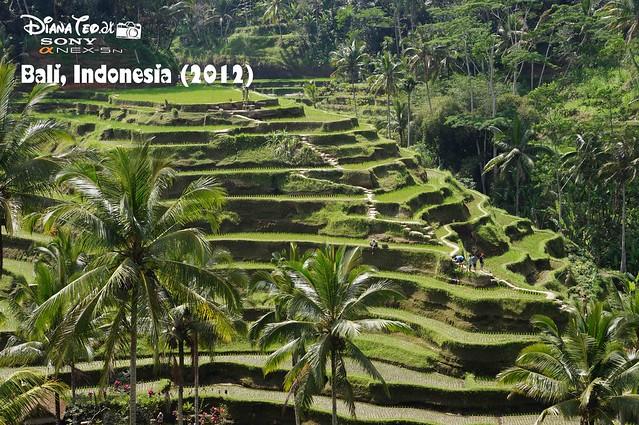 Bali Tip 2012 04