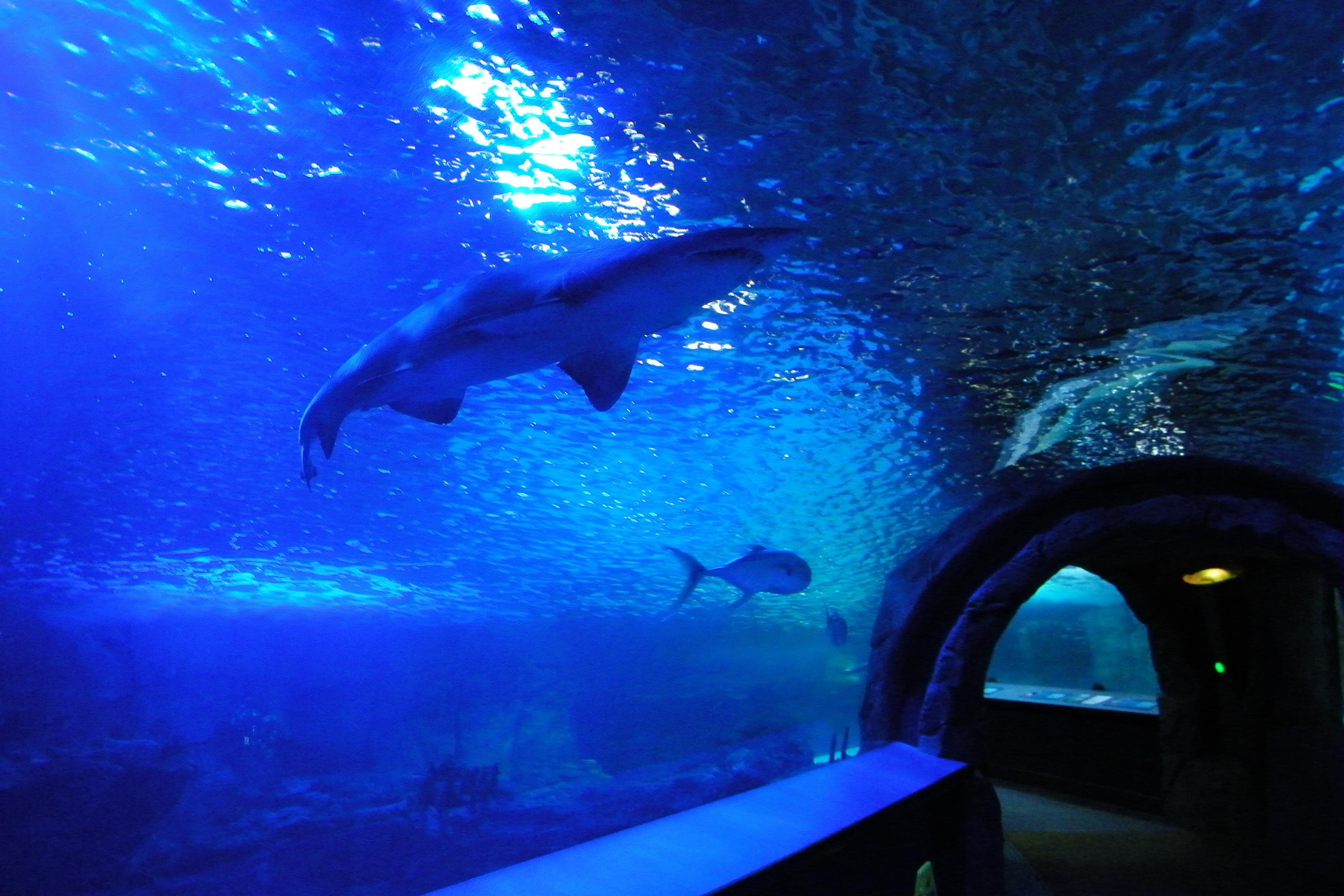 Visit To The Newport Aquarium Newport Kentucky Great