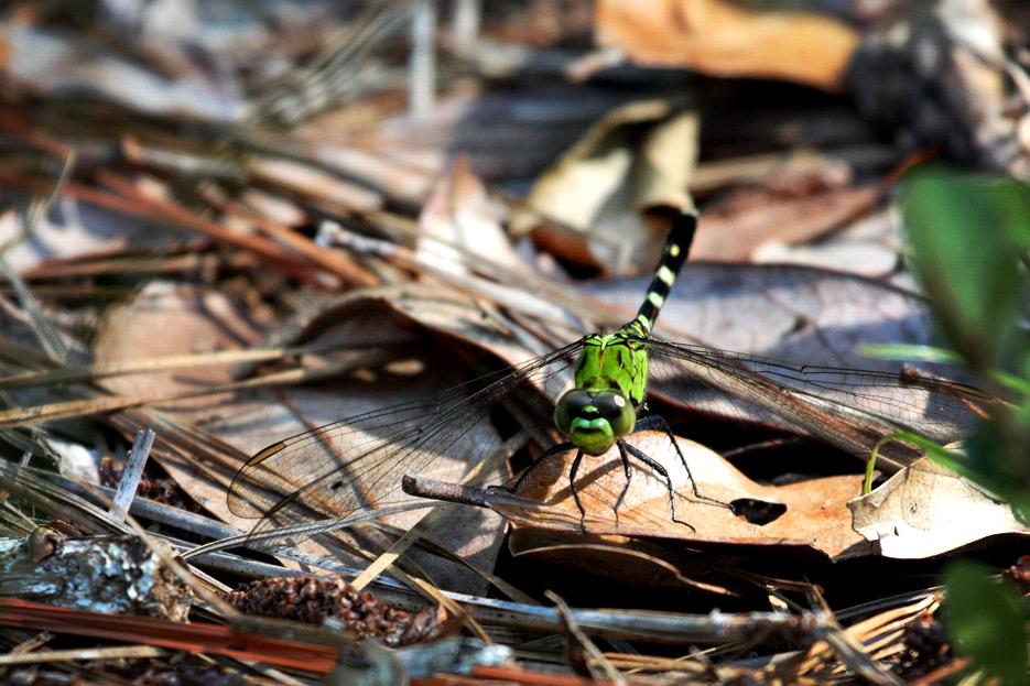 072612_04_zbug_dragonfly05