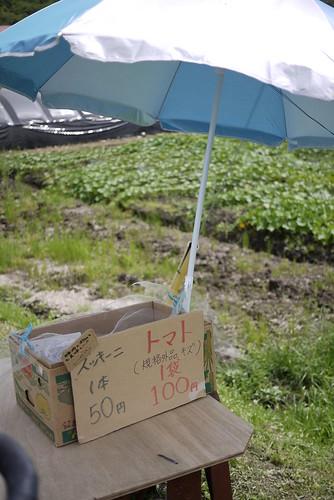 Tomatoes at roadside stall/honesty box near Biei (Hokkaido, Japan)