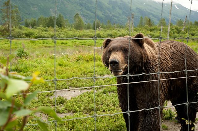 Alaska96 (1 of 1)