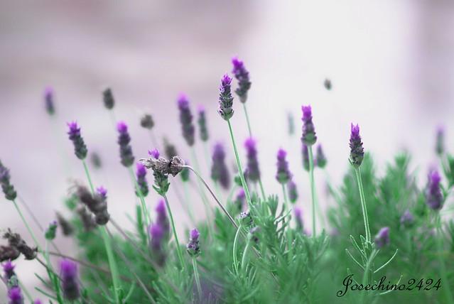 Aromas y color
