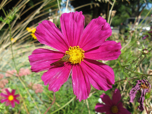 Macro Flowers 4