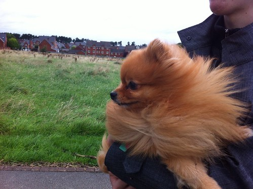 Wind Through My Fur