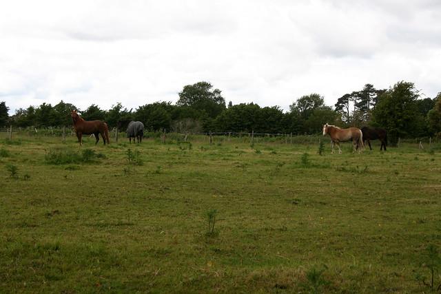 Fields near Hythe
