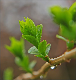 Our Daily Challenge Things That Go Together: Rain & New Growth
