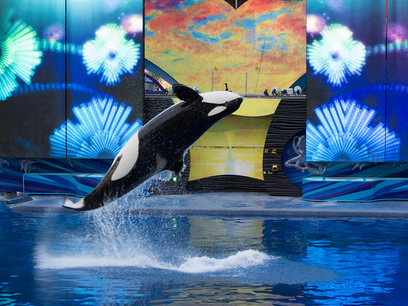 Clyde & Seamore .. and .. Shamu Rocks