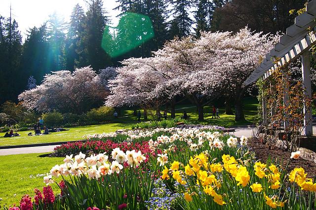 Spring in Stanley Park Gardens