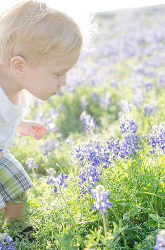 bluebonnet-edit-6209-low