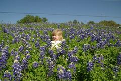 flower, field, garden, plant, lavender, wildflower, crop, meadow, bluebonnet,