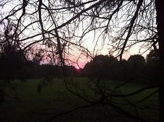 Georgia Sunrise