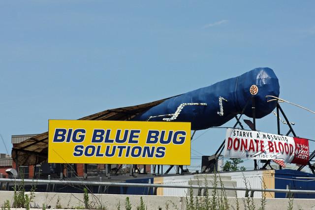 Big Blue Bug Rhode Island