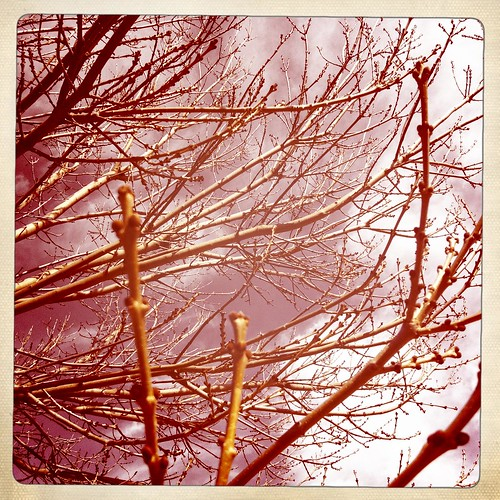 Bare branches. Day 188/366.