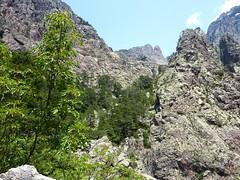 Col 1150m : vue du Capu Rossu et de la forêt de Tana di l'Orsu