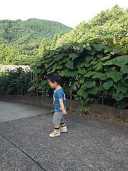 朝散歩 (2012/7/16)