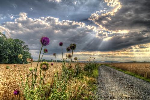 usa mountain storm flower clouds landscape virginia nikon cloudscapes loudouncounty tomlussier landscapespec2012