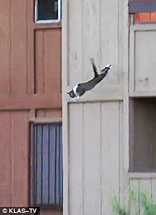 cat leaps from fire