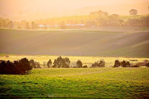 winter light sunset rural landscape countryside australia melbourne healesville victoria winery yarravalley yarraglen yarraranges maroondah
