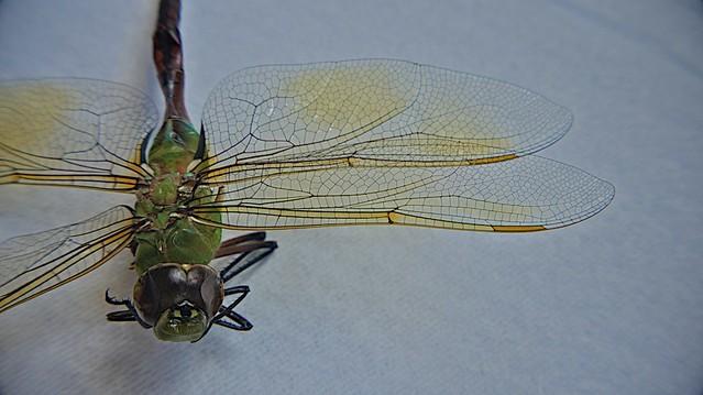 anteketborka.blogspot.com, libellule5
