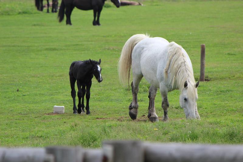 納沙布岬に行く途中に馬 その3