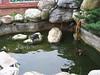 水頭48號賣店(金水食堂)戶外池塘