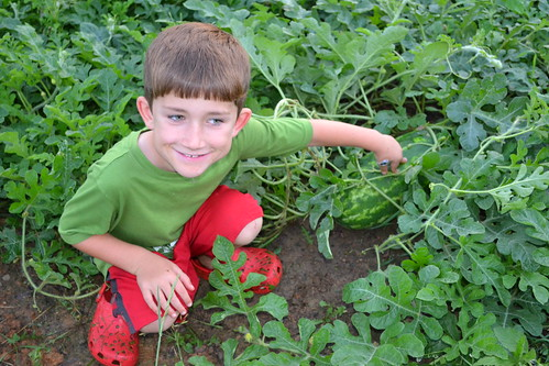 watermelon farmer by oyabakamama