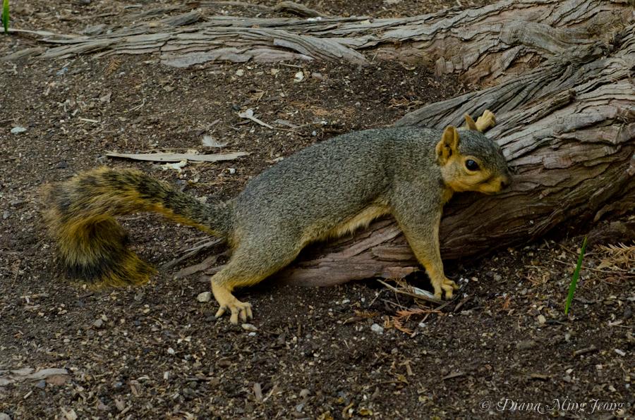 Melting Squirrel