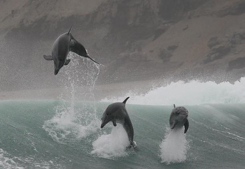Whale and dolphin watching with Nature Expeditions in Peru 01
