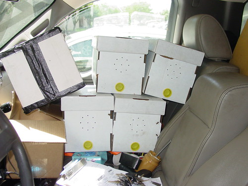 Charlie Reffitt shares the cab of his pickup truck with loose bees and boxed hives.  Each box contains a queen and initial colony, designed to attract wild bees.  The black taped box is a collected wild hive ready for delivery to a local apiary.