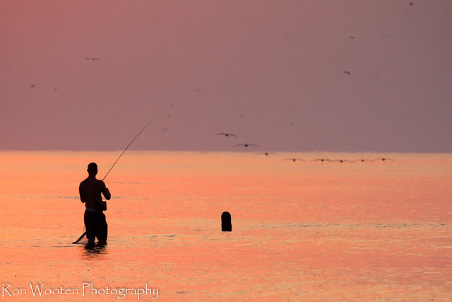 1000 images about surf fishing on pinterest the surf for Surf city pier fishing report facebook