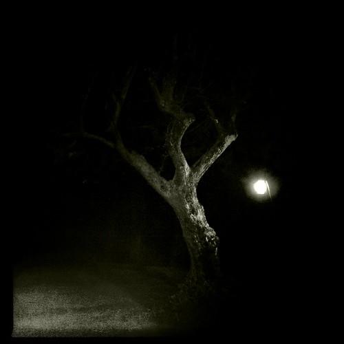 Tree in the dark #nature #B&W