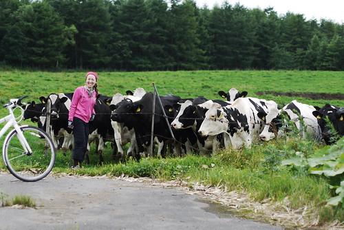 Dairy farms near Nijibetsu (Hokkaido, Japan)36