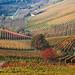 Autumn on the hills of Langhe and Monferrato #8 by Matteo Allegro [www.matteoallegro.com]