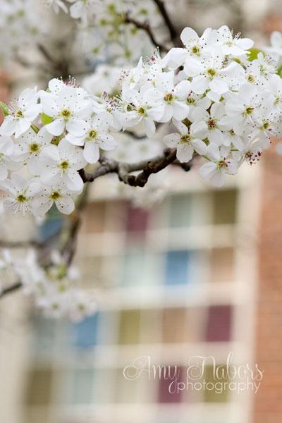 SpringTrees_Mar152014_0006