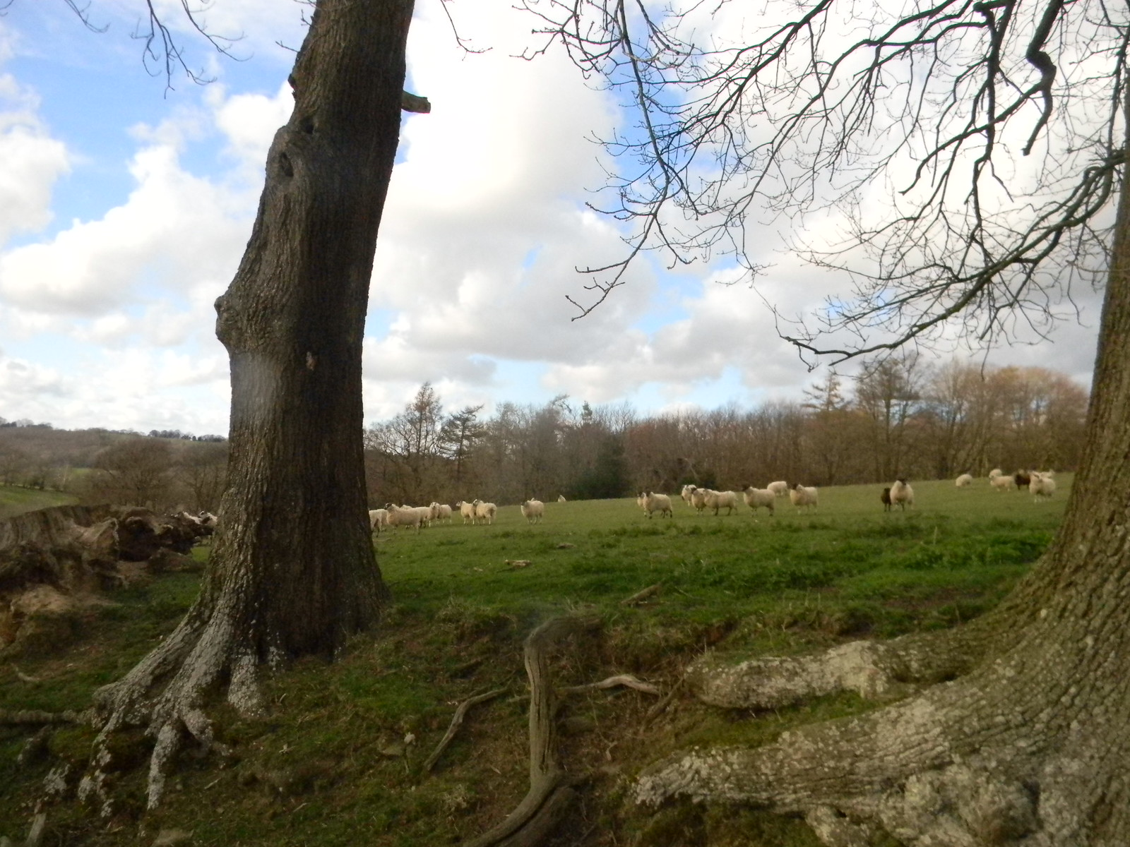 Sheepies Etchingham to Wadhurst