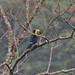 OAX14_00379a por jerryoldenettel