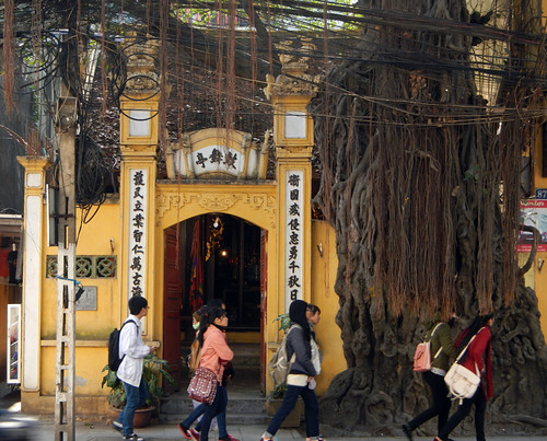 Banyan (Ficus) on a street in Hanoi
