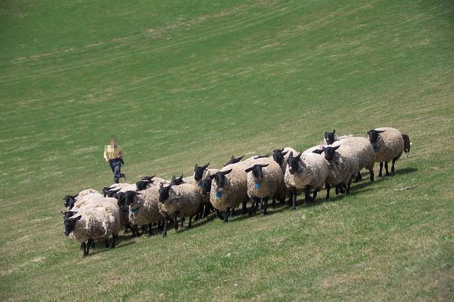 20160503羊と雲の丘_23
