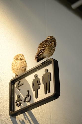 information bird