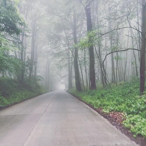 Mystical Flanders #bikeride #foggymorning #dendermonde