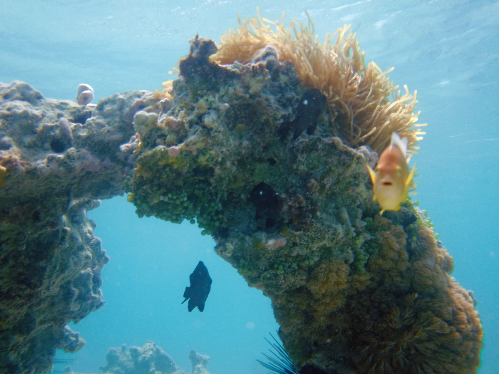 A clown fish photobombs the exquisite underwater coral formations.
