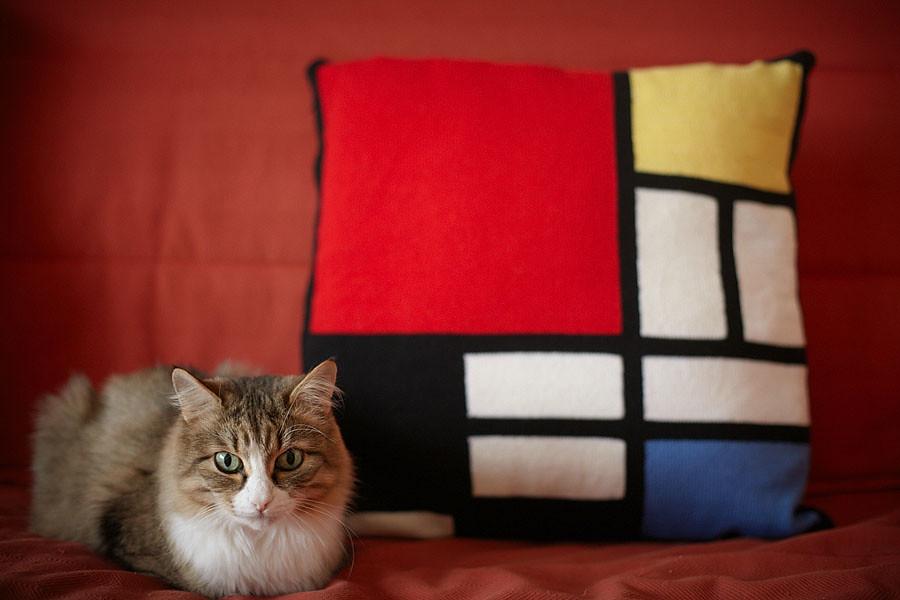 Focal cat
