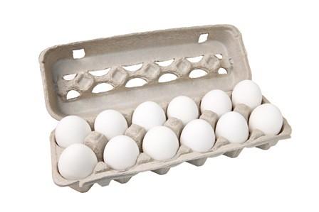 egg carton isolated