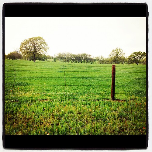 Texas Prairies #green #grass #spring #iphonetx #wildflowers