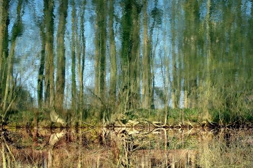 sens eau reflet paysage bourgogne arbre forêt fleuve yonne