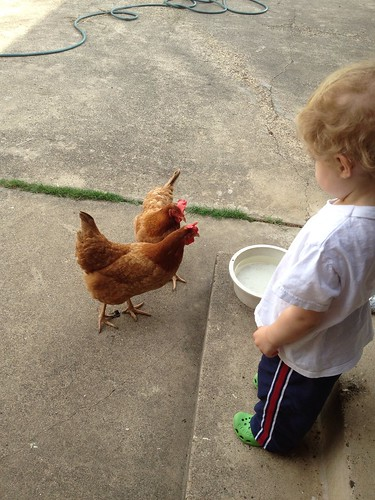 Seeing the chickens