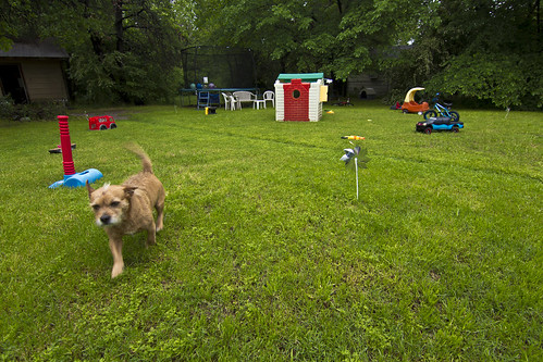 dog green beautiful yard puppy children fun spring colorful texas child play dude online bloom yup azle zat