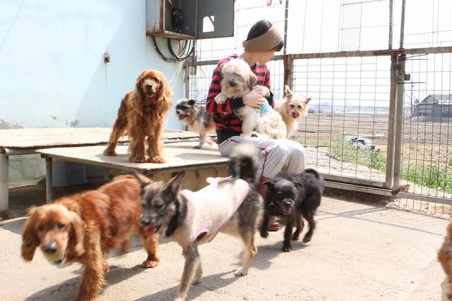Karma Dog Rescue Dal